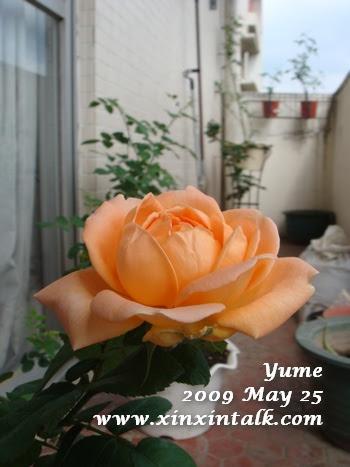 夢(Yume)