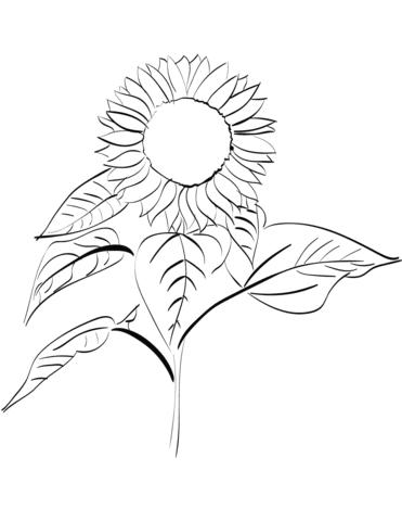 Dibujo De Girasol Para Colorear Dibujos Para Colorear Imprimir Gratis
