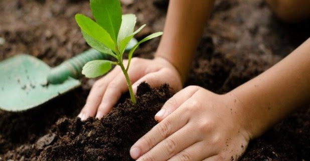 Mandatory Rule in the Philippines: Elementary to College Students Must Plant Ten Trees to Graduate