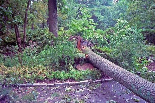 Hurricane Isabel Damage by bahayla