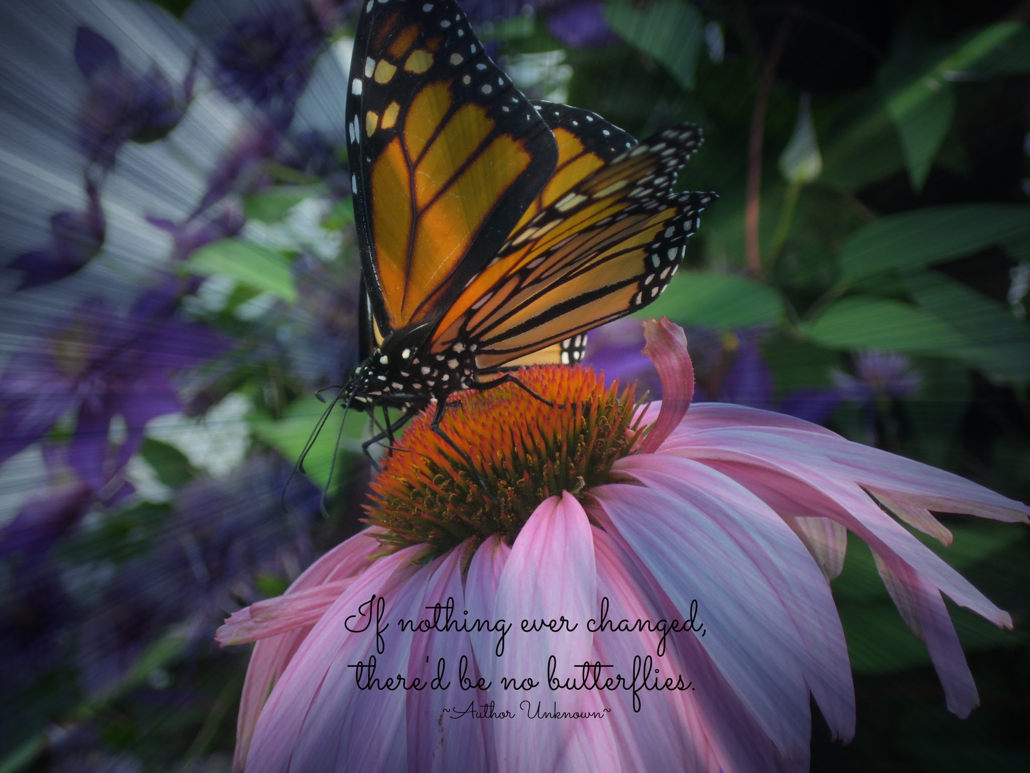 Butterfly Poems And Sayings An Assortment Of Poems About Butterflies