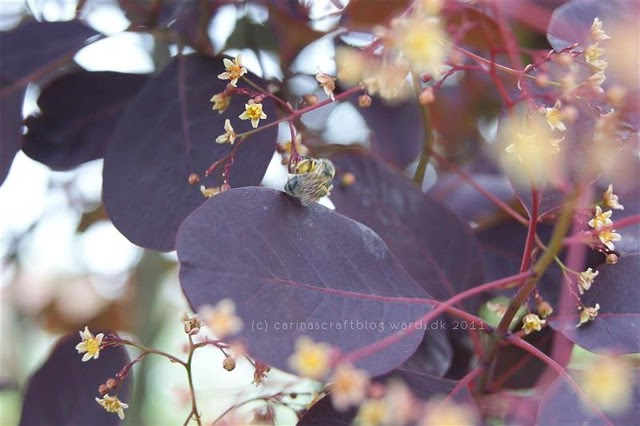 Dark leaves and bee