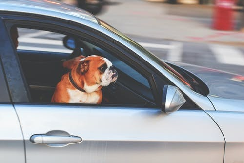 Tips to help your dog enjoy car travel