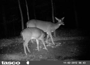 trail cam deer 11 2012