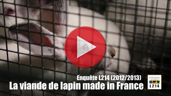 Vidéo de l'enquête L214 dans les élevages de lapins