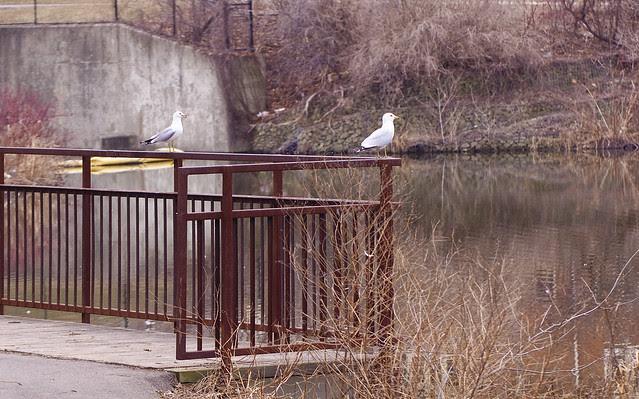 two gulls sitting