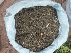 Erva pronta para o consumo apreendida em Santa Maria da Boa Vista (Foto: Divulgação/ 7º CIPM)