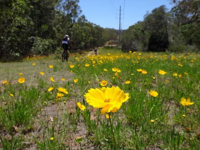 Wild flowers and Mountain Bikes