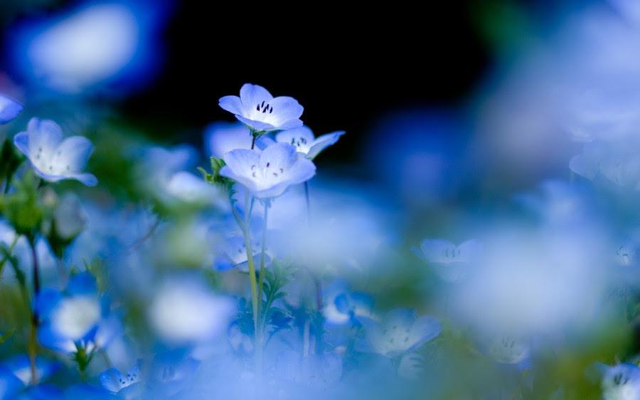 http://ic.pics.livejournal.com/shelkovaia/29389455/24663/24663_900.jpg