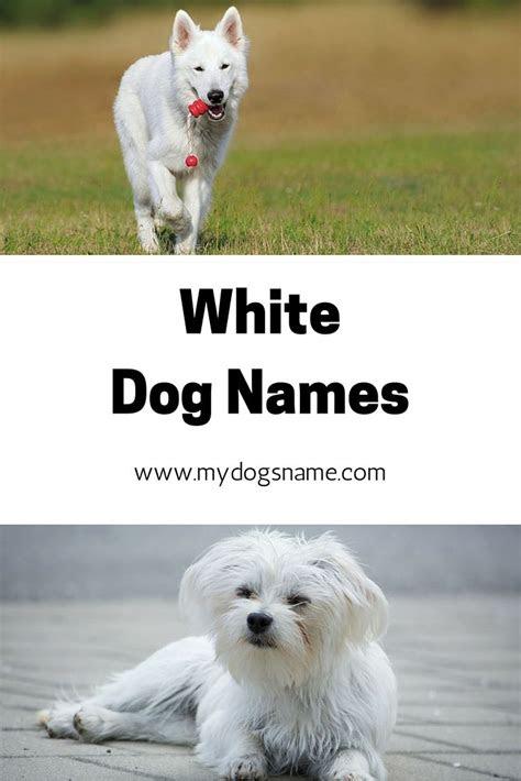 images  dog names  pinterest irish dog