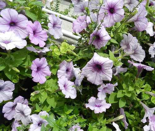 todayflowersDSCN8535