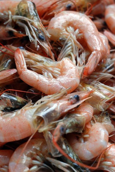 blanched school prawns© by Haalo