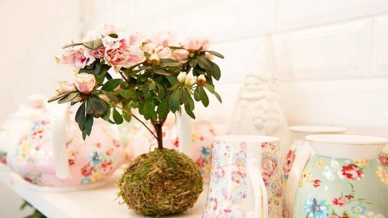 INCORPORÁ PLANTAS. Aportan frescura, detalle y naturalidad a los ambientes. (Grupo Edisur)