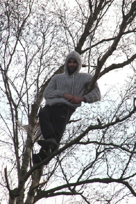 Image result for man up a tree