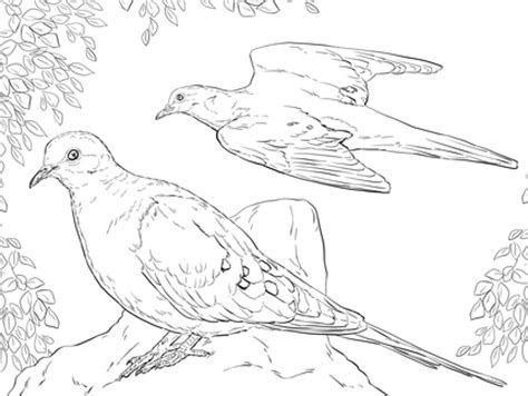 Free Coloring Pages Birds Flying