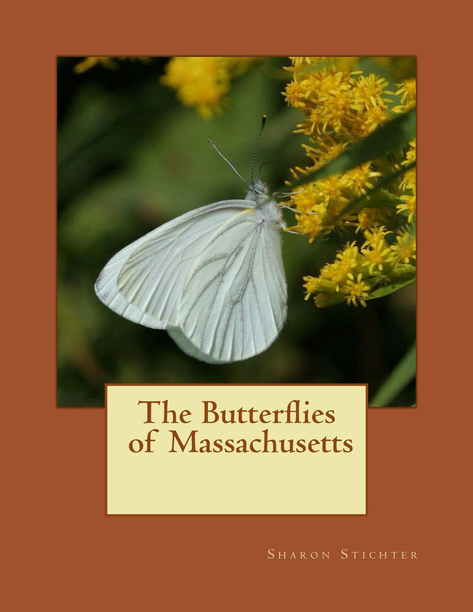 The Butterflies Of Massachusetts Their History And Future