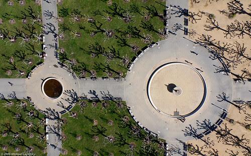 Pollarded plane trees, Golden Gate Park por Michael Layefsky