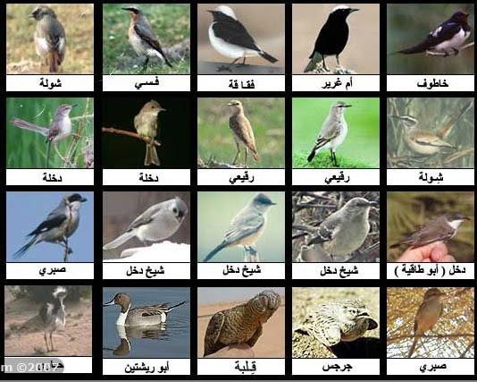 اسم طائر مكون من عشر حروف
