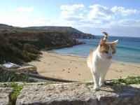 gatto+in+vacanza