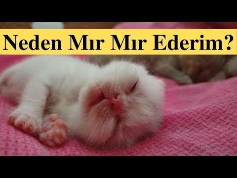 Yeni Doğan Yavru Kediler İlk Ne Zaman Mırlar?