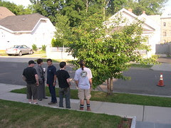 The landscaping crew discusses pruning my tree