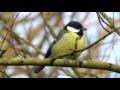 Didžioji paukščių paslaptis