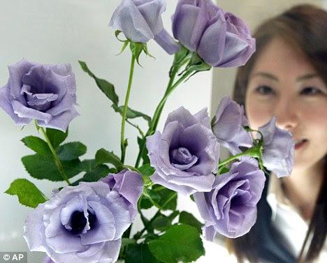 Mawar Biru Mulai Dijual di Amerika