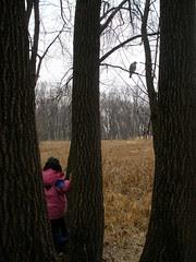 Olivia Looking at Hawk in Tree