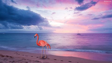 flamingo wallpapers  background pictures