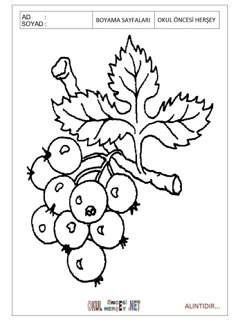 üzüm Boyama Sayfaları