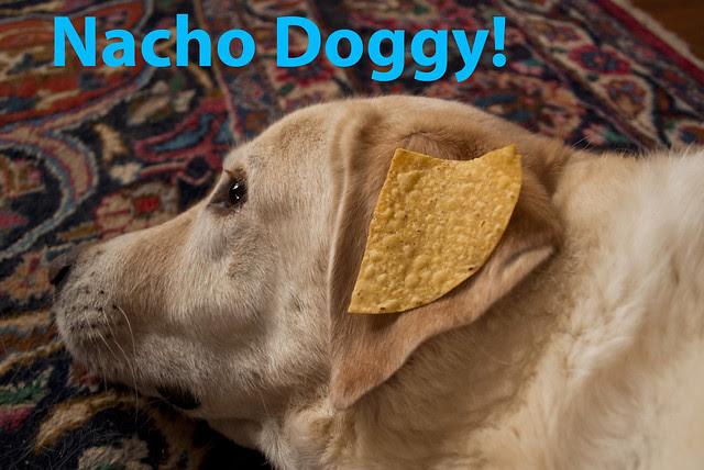 nacho doggy!