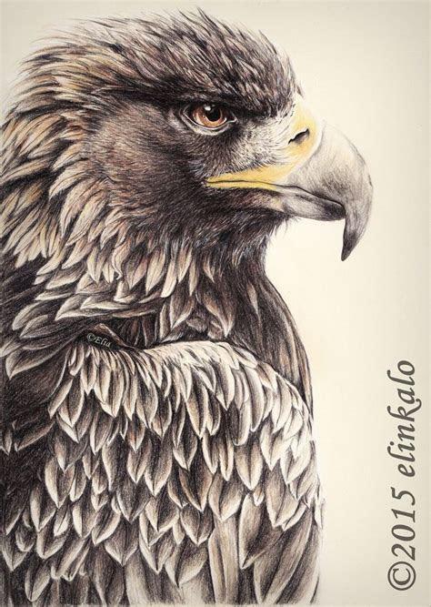 ideas  eagle drawing  pinterest eagle