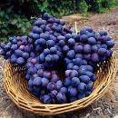 propiedades uvas