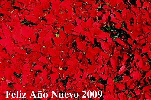 Happy Islamic New Year 1430 H & Happy New Year 2009