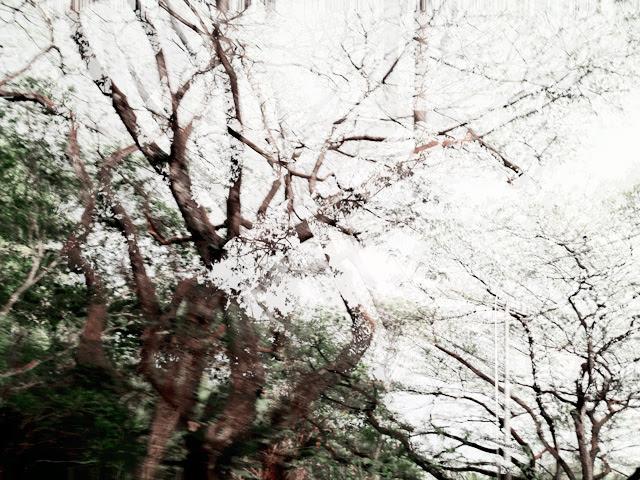 chio shot by typicalben 5