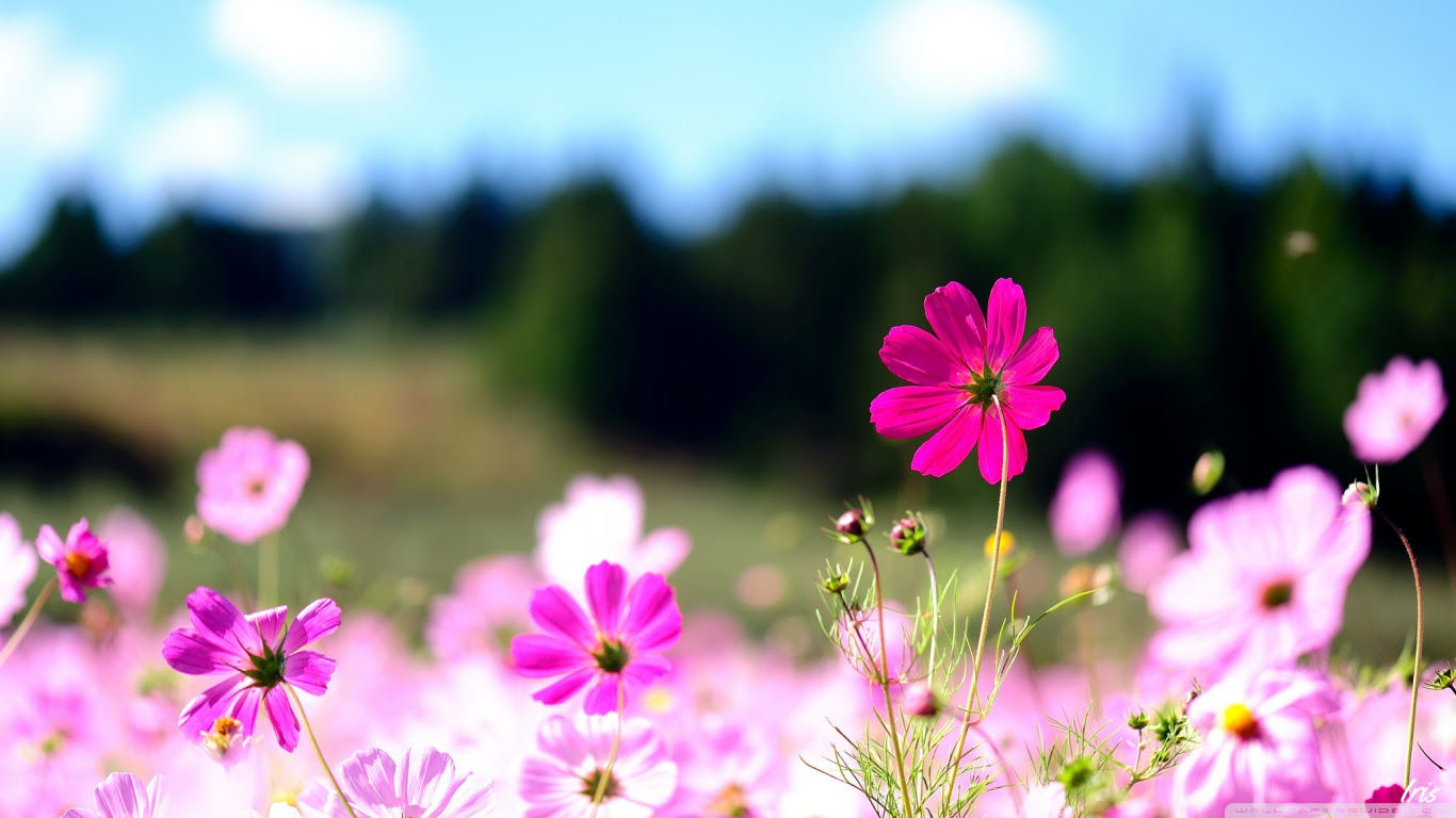 Unduh 7600 Koleksi Gambar Kartun Cowok Ngasih Bunga Gratis Terbaik