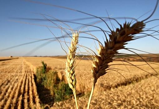Crop Farm Production