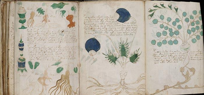 http://www.etaletaculture.fr/wp-content/uploads/2012/12/manuscrit-voynich-botanique.jpg