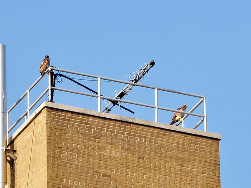Norman and Isolde on the Hospital Roof