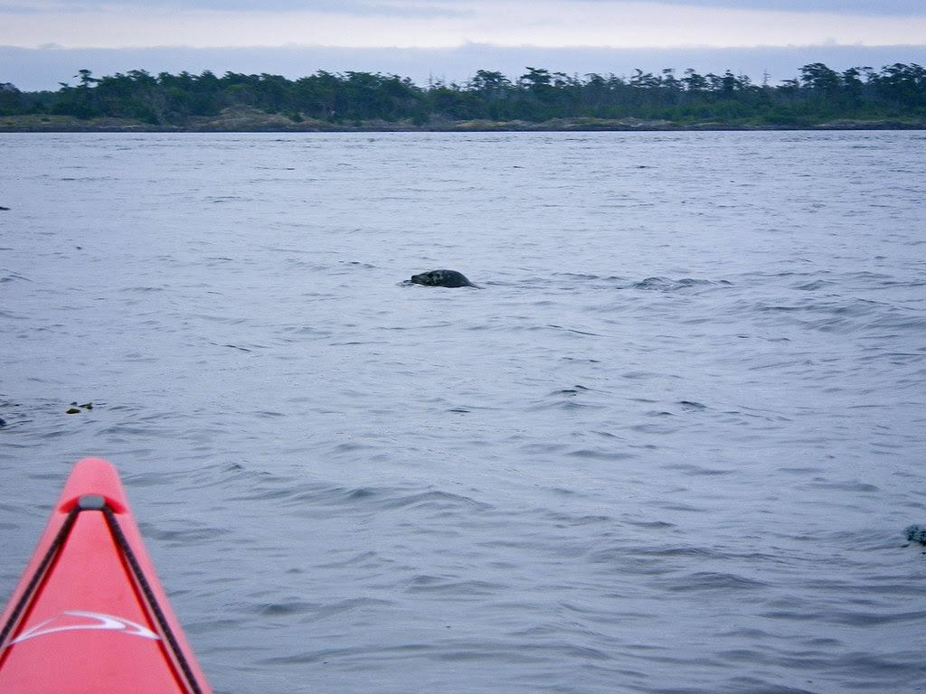 2010-06-20 Chatham Island 019