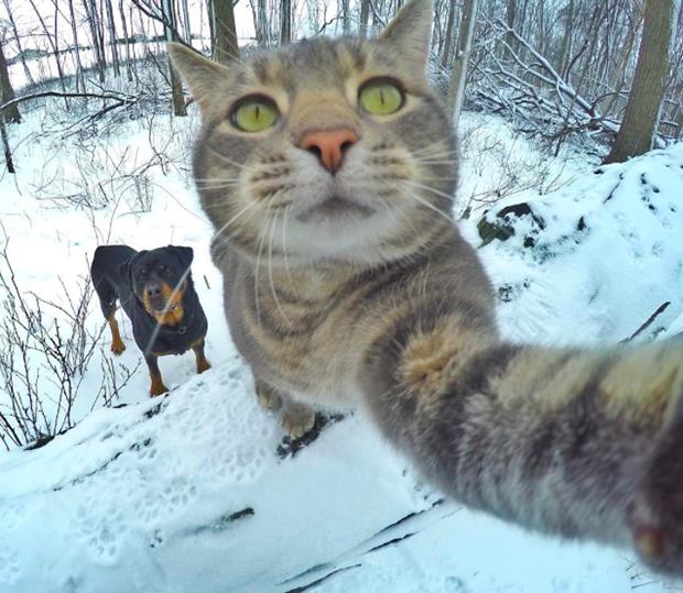 Resultado de imagen para gatos tomandose selfies