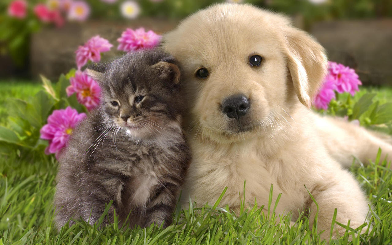 Teddybear64 Images Dog And Cat Wallpaper Hd Wallpaper And Background