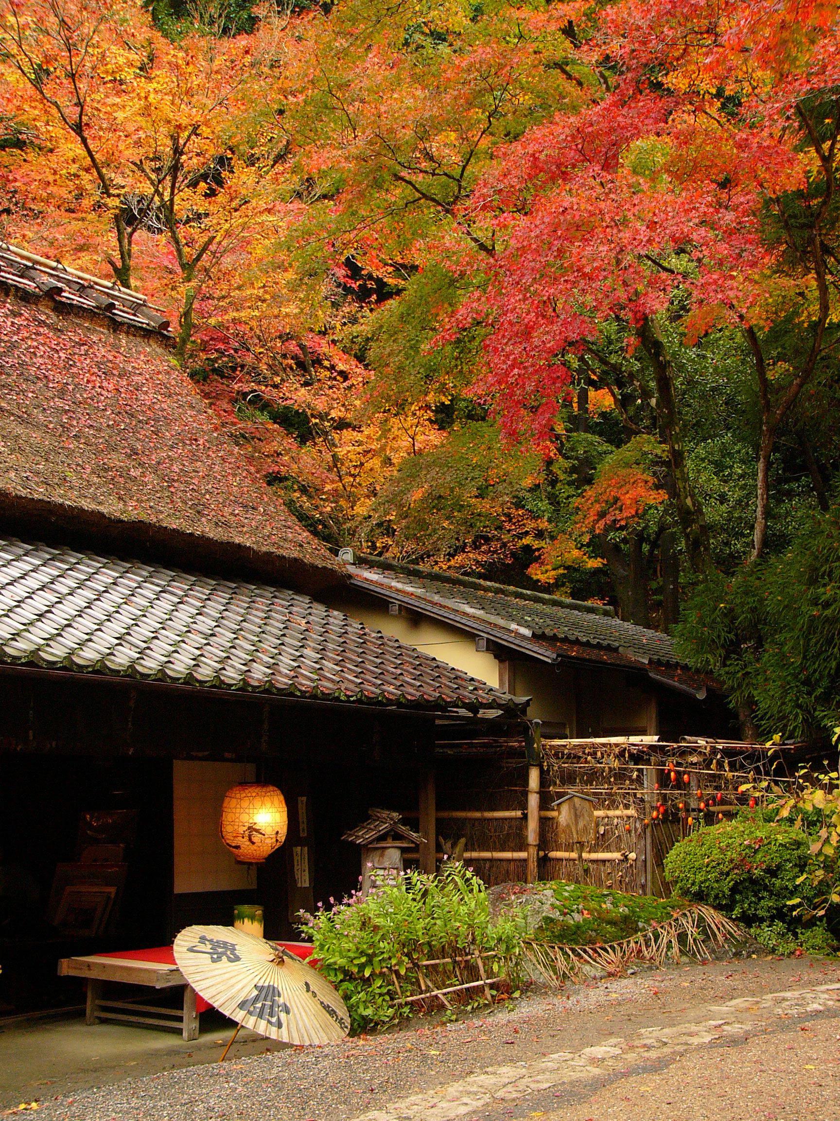 Travel Review: Unique Japan Cultural Experience, Tokyo ...