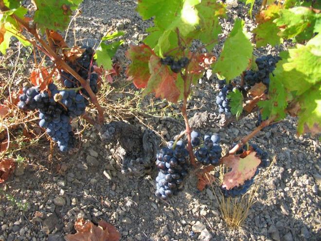 4.colores de la viña