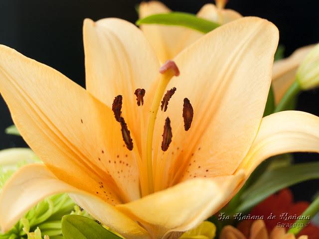 Flores dia de la Mujer