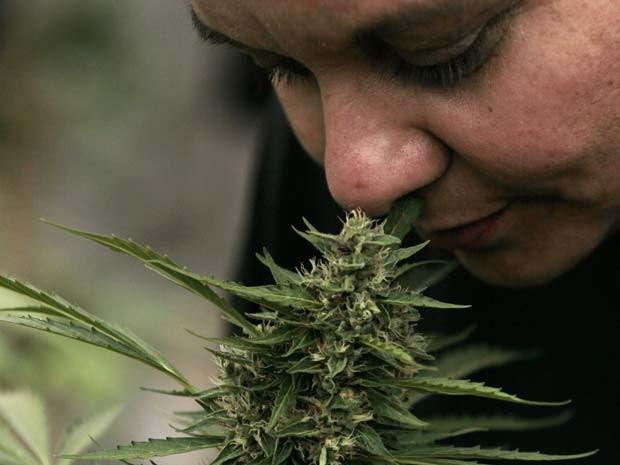 Foto de arquivo mostra mulher que sofre de lúpus e também foi diagnosticada com câncer de mama em 2011, cheira lanta de maconha durante apresentação de plantação legal de maconha medicinal no município de La Florida, perto de Santiago, no Chile (Foto: AP Photo/Luis Hidalgo, File)