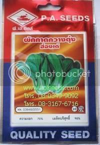 เมล็ดพันธุ์ผักกาดกวางตุ้งฮ่องเต้ ตรารถถัง
