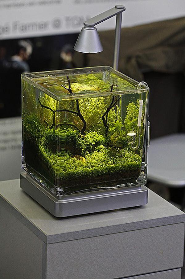 nano planted aquarium