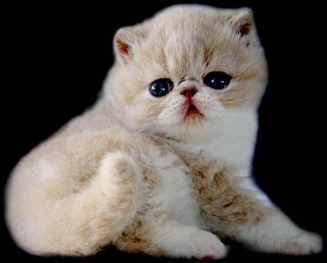 Unduh 65+  Gambar Kucing Ter Lucu Lucu HD