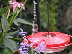 HummingbirdFeeder6